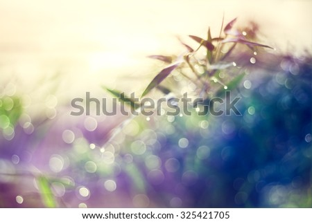 Defocused Bokeh, twinkling lights vivid color blurred bokeh spring from bamboo leaf background. Abstract nature and soft tone color style.