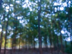 Defocused bukeh background of dense forest.