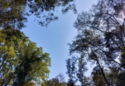 Defocused bukeh background of trees and the sky.