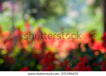 Defocused colorful trees for bright nature background