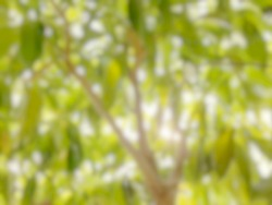Defocused gaussian blur on green leaves use for background