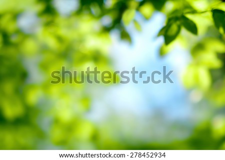 Defocused scene of fresh foliage and blue sky, ideal as a nature background with bright vibrant colors #278452934