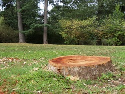 Deforestation concept with a tree stump in a green forest.