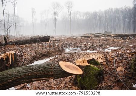 Deforestation, Destruction of Deciduous Forests. Damage to Nature. Ukraine. Europe. Pollution. #791550298