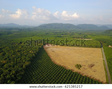 Deforestation environmental damage. Aerial drone view. Rain forest destroyed to make way for oil palm plantations #621385217