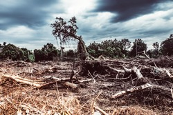 Deforestation environmental damage  tropical rain forest destroyed to construction. building New city. Global warming climate change concept idea background