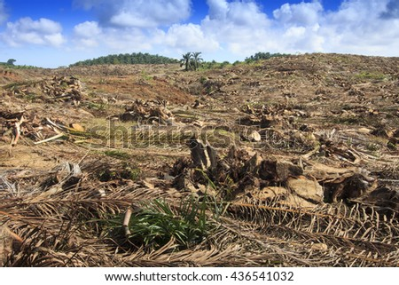 environment essay the devastation of deforestation Effects of deforestation on animals forests cover 31  at this rate all of the earth's  forests will be gone within 100 years [3] quick navigation for.