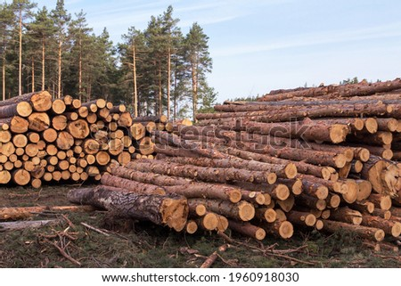 Deforestation, forest destruction. Chopped tree on ground in forest. Pile, stack of many sawn logs of pine trees close up Stock photo ©
