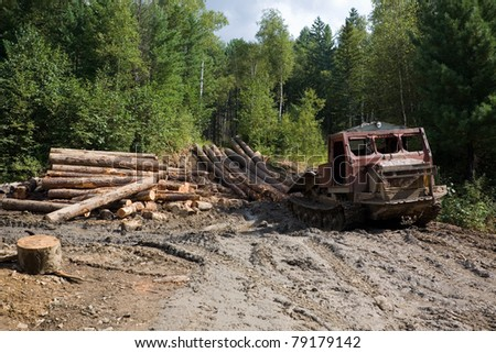 Deforestation. Forestry. Old skidder transports sawed trunks of coniferous trees in the place of processing.