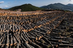 Deforestation in Kaz Mountains. Cutting thousands of trees for the gold mine. Forest destruction in Kirazli - Kaz Daglari, Canakkale / Turkey.