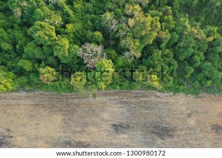Deforestation. Logging. Environmental problem