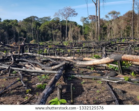 Deforestation of the Amazon rainforest by slash-and-burn. Amazon, Brazil. Photo was taken on March 4, 2019.
