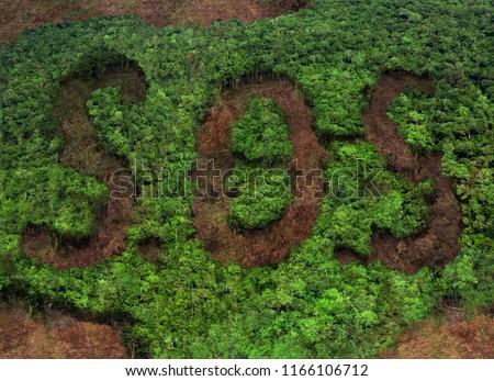 deforestation - S.O.S concept