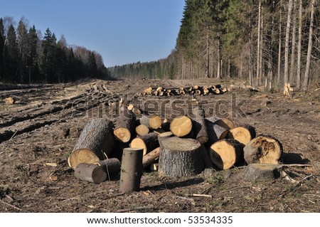 Deforested area in a forest with cutted trees, Russia