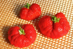 Deformed giant Strawberries. A variety called Amaou from Fukuoka Prefecture. This variety is grown in Kyushu, Japan.