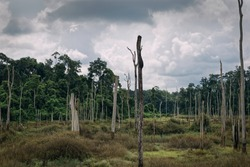 Degraded forest in Khammouan, Laos