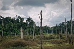 Degraded forest in Khammouan, Laos