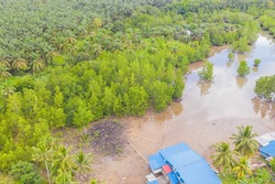 Degraded of mangrove forest and dead tree problems from climate change and open pond activity. Environmental topics background. Concept of save the earth from environmental crisis.
