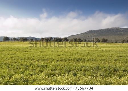 Dehesa in Ciudad Real province (Spain)