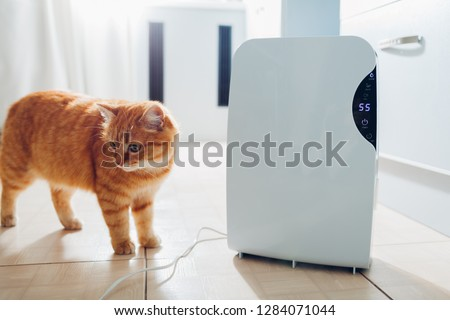 Dehumidifier with touch panel, humidity indicator, uv lamp, air ionizer, water container works at home while cat walking by on kitchen. Air dryer