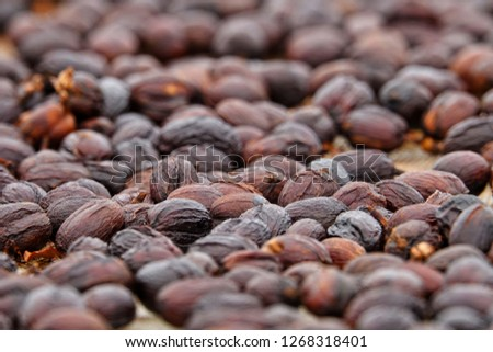dehydration fermented ripe coffee berries under long exposure natural wind and sun shade to produce nicely juicy brown color from beans shells