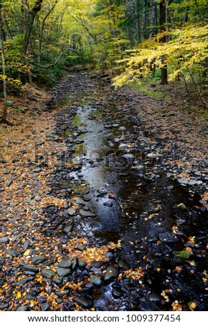 Delaware Township, Pike County, Pennsylvania, USA:  Autumn foliage in a  stream in a wooded area at Dingman's Falls, in the Delaware Water Gap National Recreation Area.