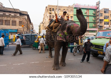 Delhi, India - November 5, 2009: Elephant with raised trunk standing in middle of road causes a chaotic traffic jam on a downtown street blocking cars and vehicles