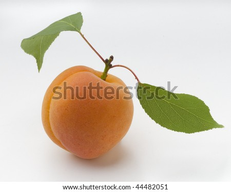 delicate and fresh apricot fruit with green leaves