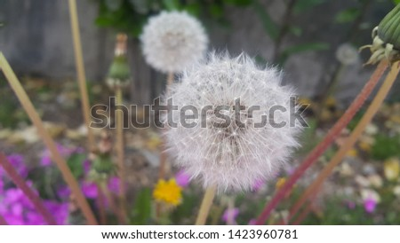 Delicate fluffy flower selectively focused on a blurred green leaves background. A closeup view with selective focus #1423960781