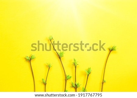 Delicate little leaves from open buds on branches-sprouts on a yellow background. Spring, the beginning of a new life. Copy space ストックフォト ©
