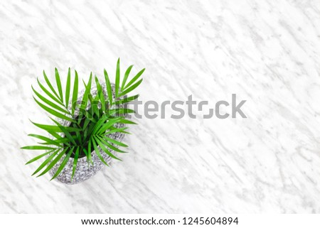 Delicate Parlor palm leaves in a granite vase, on marble background with copy space. #1245604894