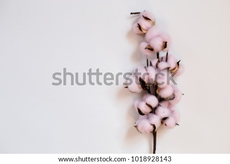 Delicate pink cotton flowers on the white background