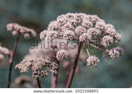Delicate pink flowers taken with a shallow depth of field