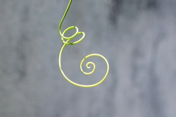 Delicate swirl of a climbing plant