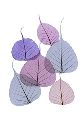 Delicate tracery of colored skeleton leaves on white in shades of purple and blue with different shapes and sizes over copyspace