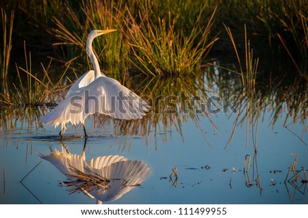 Delicate white egret at dawn