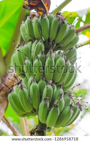 Delicious banana, delicious, delicious from nature.