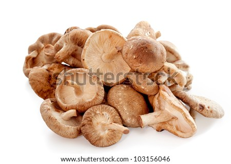 Delicious edible shiitake mushrooms common in Asia - stock photo