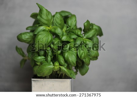 Delicious, green basil on the table #271367975