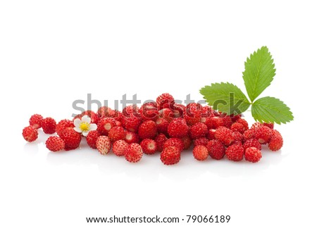 Delicious wild strawberries with green leaves and flower, isolated