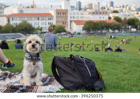 DELORES PARK, SAN FRANCISCO, CALIFORNIA - MARCH 21, 2016: Basil, a yorkie poo stands next to a couple taking pictures of San Francisco's skyline.