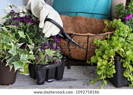 Demonstration of a young woman giving a tutorial on how to plant a hanging basket or pot of flowers. Flowers include Verbena, Petunias, Creeping Jenny and Alyssum.