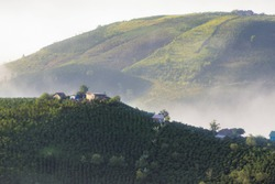 Dense fog and magic light at sunrise with small houses and coffee farm