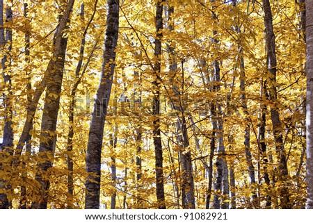 Dense forest in autumn