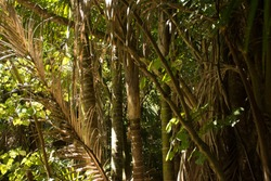 Dense forest in New Zealand looking at palm trunks