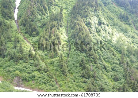 Dense forest of conifers and hardwoods on steep mountain slope,Perseverance Trail, Juneau,Alaska