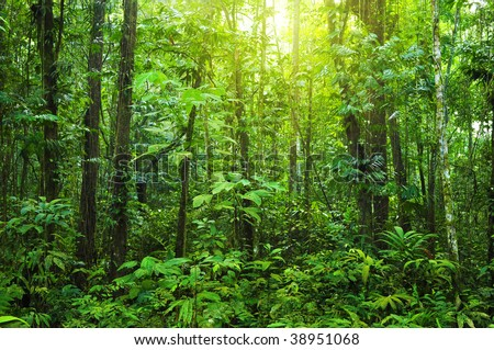 Dense forest. Tropical dense forest with morning sunlight shine on to it.