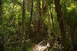 Dense forests in New Zealand with palms, trunks and branches