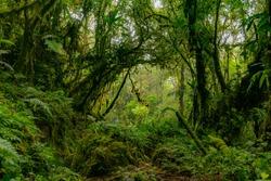 Dense green amazon jungle - rainforest