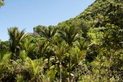 dense palm forest in New Zealand under blue skye